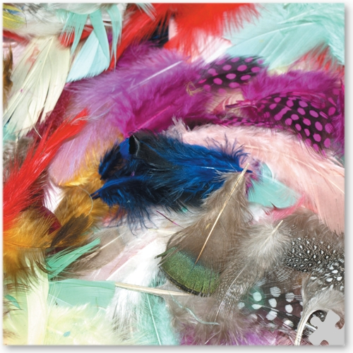 Assorted Exotic Feathers