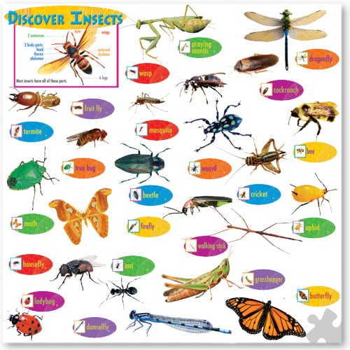 Discover Insects Display Set