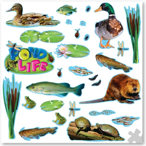 Pond Life Display Set