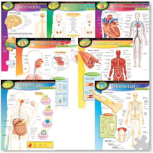 The Human Body Learning Charts Combo Pack