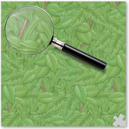 Tropical Foliage Design Fadeless Display Paper - 15m