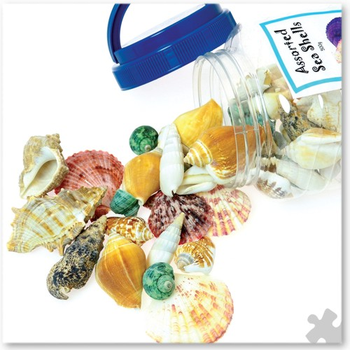 Bucket of Assorted Sea Shells